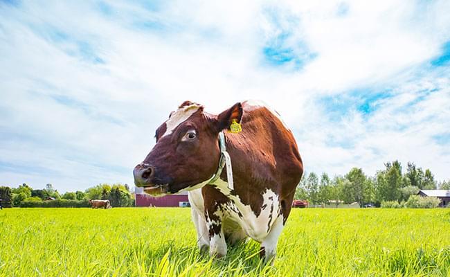 Är jag laktosintolerant? Laktosintolerans är ingen allergi och är inte farligt - Läs mer
